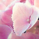Soft Pink Hydrangea by Sharon Woerner
