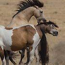 West Desert Battle by Robbie Knight
