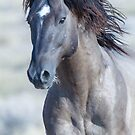 West Desert Stallion by Robbie Knight
