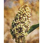 Sorghum Flower by ramanandr