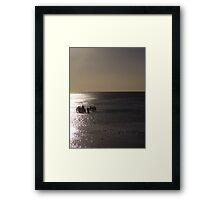 Reef Collectors on Heron Island, Great Barrier Reef Framed Print