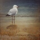 lone seagull by © Karin (Cassidy) Taylor
