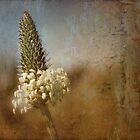 little flower head by © Karin (Cassidy) Taylor