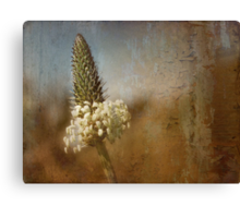 little flower head Canvas Print