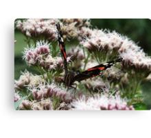 Enjoy the Nectar! Canvas Print
