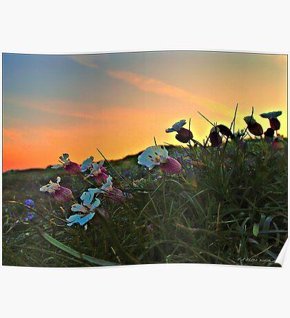 hillside flowers  Poster
