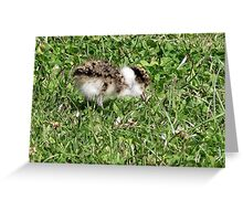 Baby  Plover Greeting Card
