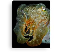 Cuttlefish Canvas Print