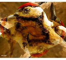 Designs Inspired By Nature: Juvenile Woodpecker Photographic Print