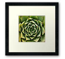 Succulent plant Framed Print