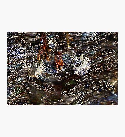 Tide Water Marsh Photographic Print