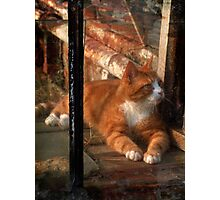 thomas in the greenhouse Photographic Print