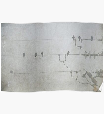 Birds on a wire. Poster