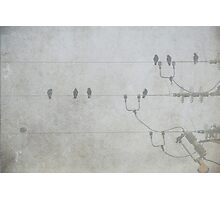 Birds on a wire. Photographic Print