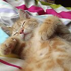 Sleepy ginger kitten by TesniJade