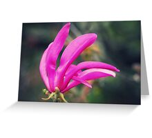 """ The Magnolia...................."" Greeting Card"