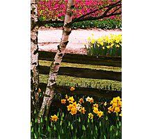 Mount Vernon Tulip Festival Photographic Print