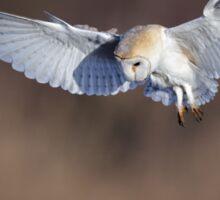 Barn Owl (Tyto alba) Sticker