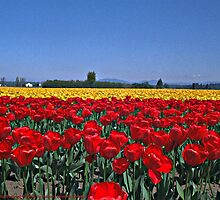 Field of Tulips by Robert Breisch