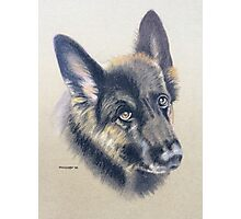 Koffi the beautiful German Shepherd Photographic Print
