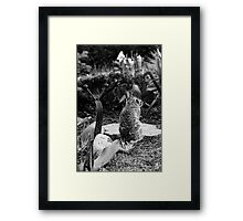 The Snail And The Bunny Framed Print