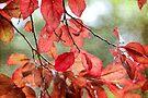 Leaf Blush by Astrid Ewing Photography