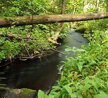 The unidentified stream in Hillerstorp III by João Figueiredo