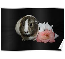 Daisy the Guinea Pig Poster