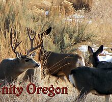 Muley Antics by BettyEDuncan