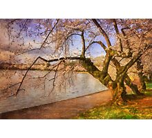 At The The Cherry Blossom Festival Photographic Print