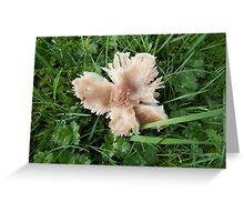 Toadstool on the Towans Greeting Card