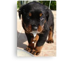 Cute Rottweiler Puppy Lapping Milk Canvas Print