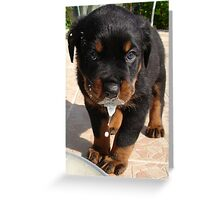 Cute Rottweiler Puppy Lapping Milk Greeting Card