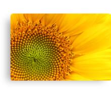 Fibonacci Sequence Canvas Print