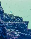 Cape St Marys by Yukondick
