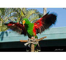 Ecletus Parrot Photographic Print