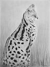 Serval by Heather Ward