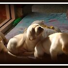 Desirable, Adorable Puppies by lettie1957