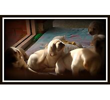 Desirable, Adorable Puppies Photographic Print