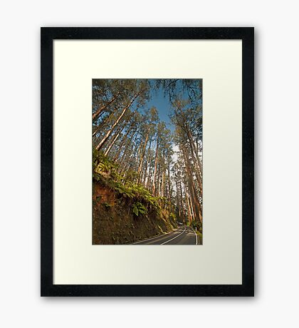 Black Spur Ridge Yarra Ranges National Park Framed Print