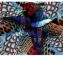 Designs Inspired By Nature: Wild Pheasant Photographic Print