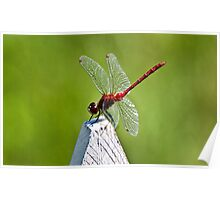 Dragonfly on picket fence Poster