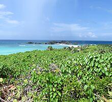 Beach vegetation. by Anne Scantlebury