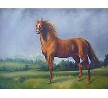 Man O'War Racehorse Photographic Print