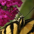 lady butterfly by ANNABEL   S. ALENTON