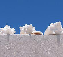 Conch shells.  by Anne Scantlebury