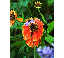 Big Orange Bloom Photographic Print