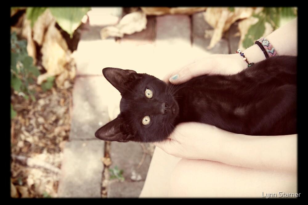 Little black cat by Lynn Starner