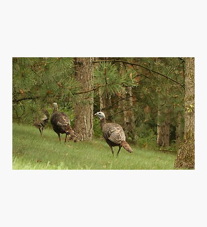 Holy Hill Turkeys Photographic Print