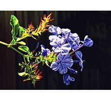 Tropical Blue Photographic Print